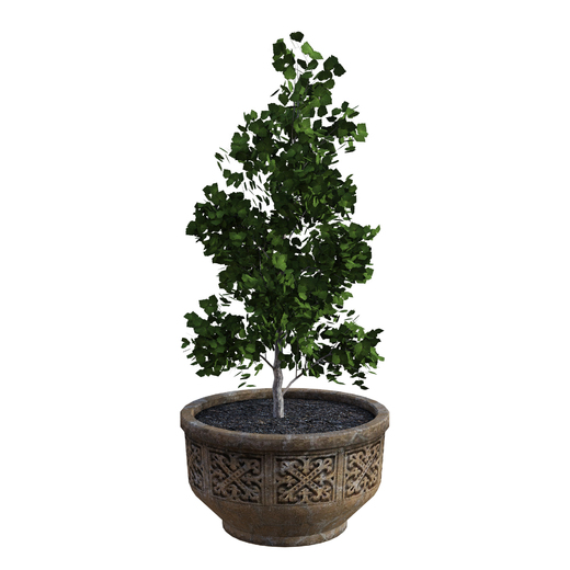 potted-tree-4617467_1920.jpg